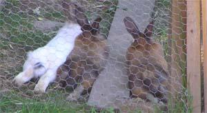 drei Hasen liegen in der Sonne