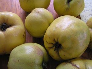 gelbe Apfelquitten